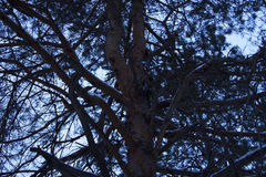 Ramos bonitos da árvore Imagem de Stock