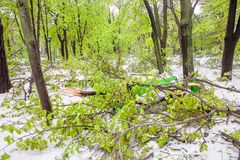 Ramos caídos após uma queda de neve Imagens de Stock