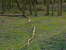 Ramos caídos no assoalho da floresta Imagens de Stock Royalty Free