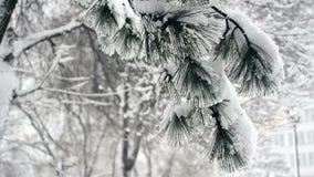 Ramos cobertos de neve do pinho na queda de neve pesada do inverno video estoque