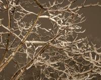 Ramos cobertos de neve na noite Fotografia de Stock