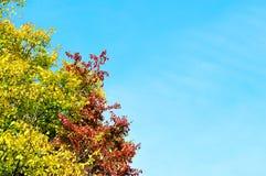 Ramos coloridos da árvore amarelada no fundo do céu azul Fotografia de Stock Royalty Free