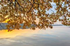 Ramos com as folhas de outono sobre o rio fotos de stock royalty free