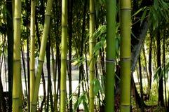 Ramos com as folhas dos bastões de bambu Imagens de Stock
