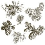 Ramos coníferos das árvores com cones: pinho, abeto vermelho, abeto, cypr ilustração stock