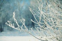 Ramos congelados cobertos na geada Imagens de Stock Royalty Free