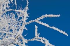 Ramos congelados das árvores fotografia de stock royalty free