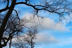 Ramos contra o céu azul fotos de stock royalty free