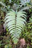 ramos Coração-dados forma na floresta úmida das madeiras imagens de stock royalty free