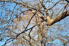 Ramos da árvore contra um céu azul claro Fotos de Stock