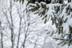 Ramos da árvore de abeto cobertos com a neve na floresta Fotografia de Stock Royalty Free