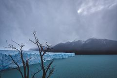 Ramos da árvore inoperante contra a geleira de derretimento imagem de stock