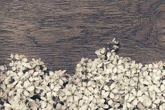 Ramos da cereja de pássaro em uma placa de madeira Beira Copie o espaço Preto e branco, fundo do sepia Fundo da madeira do vintag Fotos de Stock Royalty Free