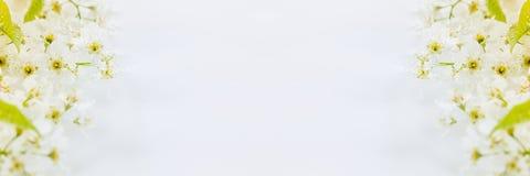 Ramos da pássaro-cereja e da folha verde na água com espaço da cópia Beira, quadro Fundo floral Mola, fundo do casamento Fotos de Stock Royalty Free