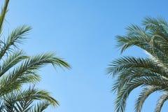 Ramos da palma de Copyspace contra o texto livre de céu azul para o espaço da cópia do desenhista e a proteção solar em países tr imagem de stock