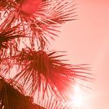 Ramos da palmeira tonificados no coral de vida foto de stock
