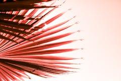 Ramos da palmeira tonificados no coral de vida fotografia de stock royalty free