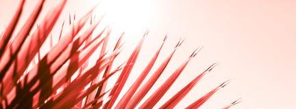 Ramos da palmeira tonificados no coral de vida fotos de stock royalty free