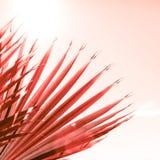 Ramos da palmeira tonificados no coral de vida foto de stock royalty free
