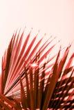 Ramos da palmeira tonificados no coral de vida fotos de stock