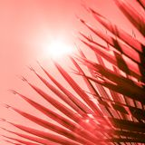 Ramos da palmeira tonificados no coral de vida imagens de stock royalty free