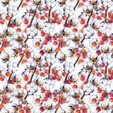 Ramos da planta de algodão, bagas vermelhas Repetindo o teste padrão watercolor Imagens de Stock Royalty Free