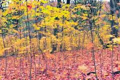Ramos das árvores com folhas amarelas Foto de Stock Royalty Free