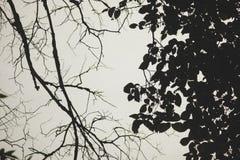 Ramos das árvores em preto e branco imagens de stock royalty free