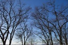 Ramos das árvores no fundo do céu Fotos de Stock