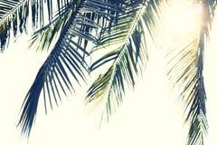 Ramos das folhas de palmeira Fotografia de Stock Royalty Free