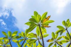 Ramos das folhas verdes Foto de Stock