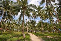 Ramos das palmas de coco sob o céu azul Fotografia de Stock