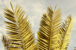 Ramos das palmeiras Fotos de Stock