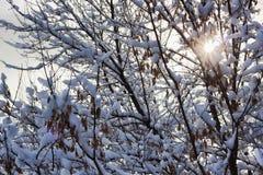 Ramos das árvores e dos arbustos cobertos abundantemente com a neve Fotografia de Stock
