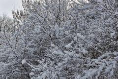 Ramos das árvores e dos arbustos cobertos abundantemente com a neve Foto de Stock Royalty Free