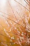 Ramos de árvore bonitos Foto de Stock