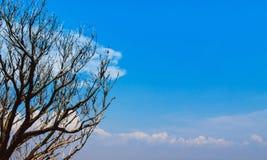 Ramos de árvore bonitos contra o céu azul com as nuvens com cópia s Fotos de Stock Royalty Free