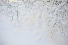 Ramos de árvore brancos do inverno no fundo da neve no inverno Fotografia de Stock