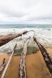 Ramos de árvore caídos na praia Imagens de Stock