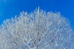 Ramos de árvore cobertos com a geada e a neve Fotografia de Stock Royalty Free