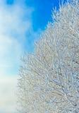 Ramos de árvore cobertos com a geada e a neve Imagens de Stock