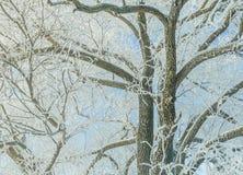 Ramos de árvore cobertos com a geada e a neve Imagem de Stock Royalty Free