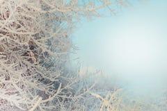 Ramos de árvore cobertos com a geada e a neve Fotos de Stock Royalty Free