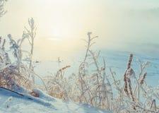 ramos de árvore cobertos com a neve e a geada perto do rio Foto de Stock Royalty Free