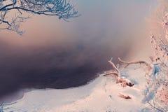 ramos de árvore cobertos com a neve e a geada perto do rio Fotos de Stock Royalty Free