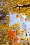 Ramos de árvore coloridos na floresta ensolarada Fotos de Stock