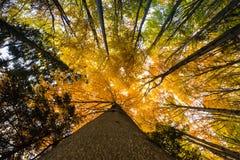 Ramos de árvore coloridos na floresta ensolarada, backgroun natural do outono Fotografia de Stock