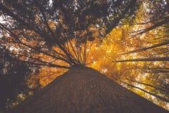 Ramos de árvore coloridos na floresta ensolarada, backgroun natural do outono Foto de Stock Royalty Free