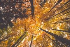 Ramos de árvore coloridos na floresta ensolarada, backgroun natural do outono Foto de Stock