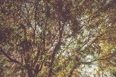 Ramos de árvore coloridos na floresta ensolarada, fundo natural do outono Fotos de Stock Royalty Free